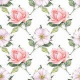 Modelo inconsútil floral con las rosas hermosas 1 Fotografía de archivo libre de regalías