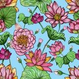 Modelo inconsútil floral de Lotus Fondo colorido dibujado mano Imagen de archivo