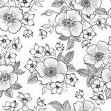 Modelo inconsútil floral Fondo abstracto del bosquejo de la flor flor Imagen de archivo libre de regalías