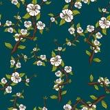 Modelo inconsútil floreciente de la manzana Rama del manzano con las flores blancas en fondo azulverde Fotografía de archivo libre de regalías