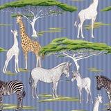Modelo inconsútil, fondo con la cebra adulta y jirafa y cebra y cachorros de la jirafa Ilustración del vector stock de ilustración