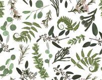 Modelo inconsútil, fondo, impresión de la textura con el eucalipto verde exhausto de la mano ligera de la acuarela, helecho del b libre illustration