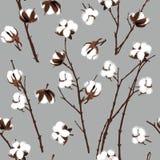 Modelo inconsútil gris de las plantas de algodón Foto de archivo libre de regalías