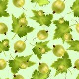Modelo inconsútil hermoso con la grosella espinosa verde realista en un fondo verde Fotografía de archivo