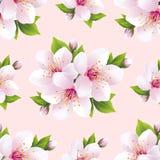 Modelo inconsútil hermoso con las flores Sakura Fotos de archivo libres de regalías