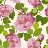 Modelo inconsútil hermoso con las rosas realistas Imagen de archivo