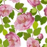 Modelo inconsútil hermoso con las rosas realistas en un fondo blanco Modelo inconsútil con las rosas de la malla 3d Vector Foto de archivo