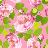Modelo inconsútil hermoso con las rosas realistas en un fondo rosado Fotos de archivo
