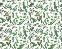 Modelo inconsútil, impresión de la textura con el eucalipto verde exhausto de la mano ligera de la acuarela, helecho del bosque,  stock de ilustración