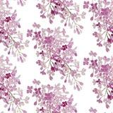 Modelo inconsútil Lila rosada de las flores Bandera del fondo del vector Imagen de archivo