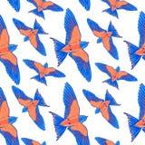 Modelo inconsútil Pájaro tropical azul en un fondo blanco Pájaro del paraíso Elementos dibujados mano del movimiento del cepillo Imagen de archivo