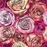 Modelo inconsútil retro con Rose Flowers Fotos de archivo libres de regalías