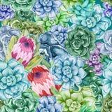 Modelo inconsútil Succulents de la acuarela con las flores del protea Cactus del color ilustración del vector