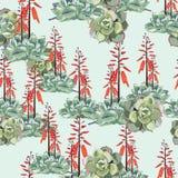 Modelo inconsútil, suculento en la floración con las flores anaranjadas stock de ilustración