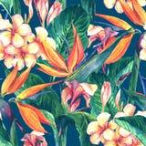 Modelo inconsútil tropical con las flores exóticas Fotografía de archivo