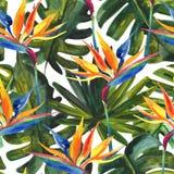 Modelo inconsútil tropical de la acuarela con la flor de la ave del paraíso, monstera, hoja de palma stock de ilustración
