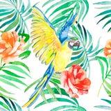 Modelo inconsútil tropical de los pájaros y de las plantas Vector de la acuarela Fondo transparente Imagen de archivo