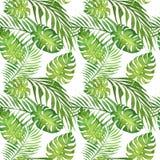 Modelo inconsútil tropical floral de la acuarela con las hojas verdes del monstera y las hojas de la palmera en blanco libre illustration