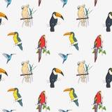 Modelo inconsútil tropical hermoso con diversos pájaros exóticos que se sientan en ramas de árbol y que vuelan en el fondo blanco stock de ilustración