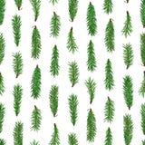 Modelo inconsútil verde realista de las ramas de árbol de abeto en el fondo blanco La Navidad, símbolo del Año Nuevo Imágenes de archivo libres de regalías