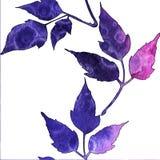 Modelo incons?til con las hojas azules y rosadas de la acuarela ilustración del vector