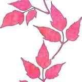 Modelo incons?til con las hojas del rosa de la acuarela ilustración del vector