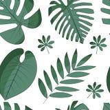 Modelo incons?til con las hojas tropicales stock de ilustración