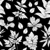 Modelo incons?til con las ramas y las hojas, elementos exhaustos del dise?o de la mano Rebecca 36 stock de ilustración
