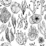 Modelo incons?til con los corales exhaustos de la mano, esponjas del mar, organismos vivos Rebecca 36 stock de ilustración