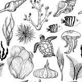 Modelo incons?til con los corales exhaustos y la vida marina de la mano marina Rebecca 36 libre illustration