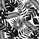 Modelo incons?til de hojas tropicales en plano libre illustration