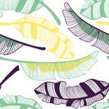 Modelo incons?til de las hojas del pl?tano Fruta, hoja del plátano Ejemplo exhausto de la mano del vector fijado en el estilo pla stock de ilustración