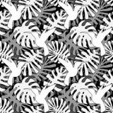 Modelo incons?til de las hojas tropicales del vector Textura sin fin con la hoja del monstera ilustración del vector