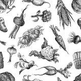 Modelo incons?til de los diversos bosquejos de las verduras ilustración del vector
