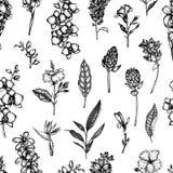 Modelo incons?til del vector de las flores tropicales aisladas en el fondo blanco ilustración del vector