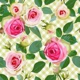 Modelo inconsútil comprobado con las rosas Fotos de archivo libres de regalías
