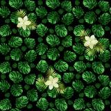 Modelo inconsútil del monstera de las hojas y de flores exóticas Fondo verde oscuro con los flores Imagen de archivo libre de regalías