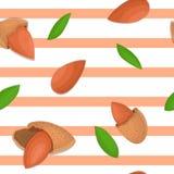 Modelo inconsútil del vector de la nuez de la almendra Fondo rayado con las nueces deliciosas, hojas El ejemplo se puede utilizar Fotos de archivo libres de regalías
