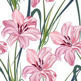 Modelo inconsútil floral Fondo real del lirio de la flor Fotografía de archivo libre de regalías