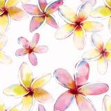 Modelo lindo precioso tropical herbario floral verde hermoso brillante del verano de Hawaii del flores amarillas blancas rosadas  Foto de archivo