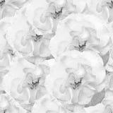 Modelo monocromático inconsútil blanco con las rosas Imagen de archivo