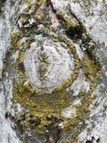 Modelo muy ?nico de madera y del musgo con color verde y amarillo sobre el tronco de ?rbol imagen de archivo libre de regalías