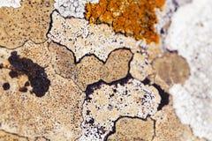 Modelo natural de la textura de la roca de la piedra caliza con el liquen fotografía de archivo