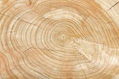 Modelo natural del árbol Foto de archivo