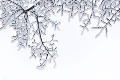 Modelo nevado de las ramas Foto de archivo libre de regalías