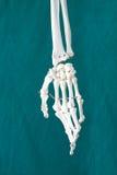 Modelo para o osso Imagens de Stock Royalty Free