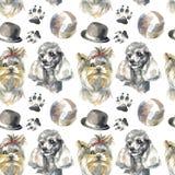 Modelo - perro del compañero libre illustration