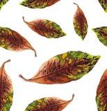 modelo pintoresco de las hojas de la magnolia stock de ilustración