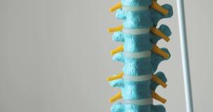 Modelo plástico de una espina dorsal humana en el fondo blanco almacen de metraje de vídeo