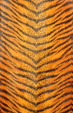 Modelo rayado del tigre Imágenes de archivo libres de regalías